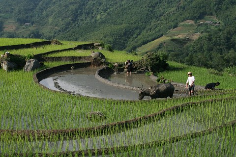5day Sapa Vietnam Tour from Bangkok